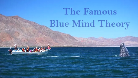"""The Famous """"Blue Mind Theory"""""""