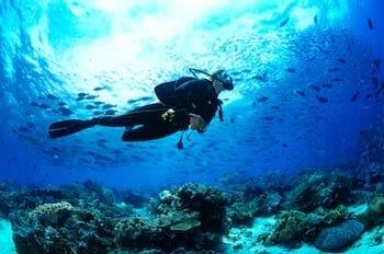 Snorkeling or Scuba Diving