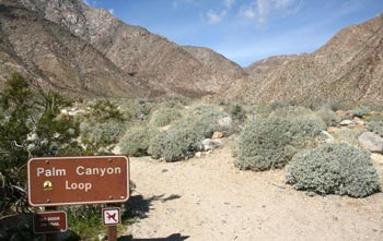 Palm Canyon Loop